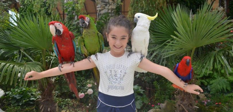 parrots castle